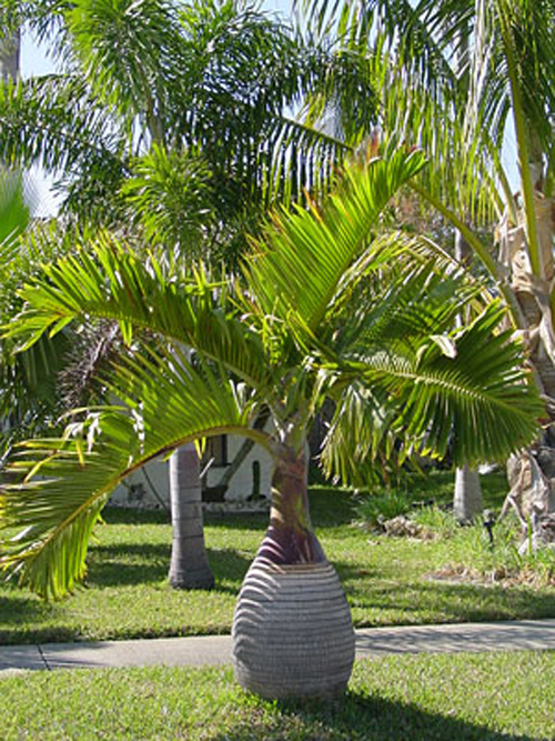 Broward palms landscape for Garden design with palms